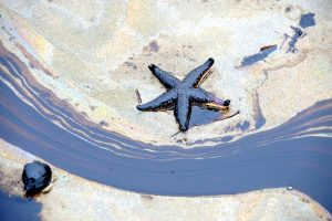 When it comes to oil spills, experts should turn to artificial intelligence